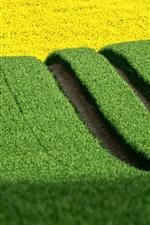 iPhone fondos de pantalla Primavera, campos, amarillo y verde