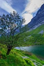 미리보기 iPhone 배경 화면 봄, 나무, 잔디, 호수, 산, 초원