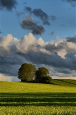 Preview iPhone wallpaper Spring, wheat fields, trees, clouds