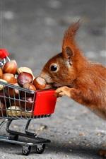 Squirrel, shopcart, nuts