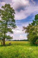 Verão, árvores, grama, veado