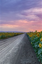 Sunflowers, road, clouds, sunset