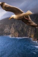 Three seagulls, birds, sea, clouds, sky