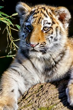 Preview iPhone wallpaper Tiger cub, sunshine