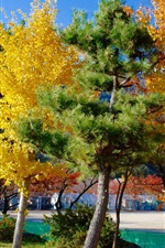 Preview iPhone wallpaper Tokyo, trees, colors, autumn