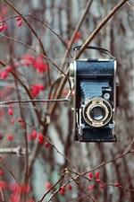Árvore, bagas vermelhas, câmera