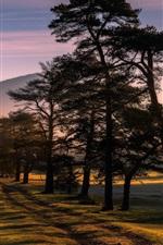 Trees, fields, sun rays, fog, morning