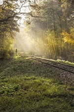 Preview iPhone wallpaper Trees, forest, railroad, sunshine