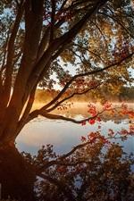 iPhone fondos de pantalla Árboles, lago, niebla, mañana, sol
