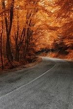 Preview iPhone wallpaper Trees, road, autumn