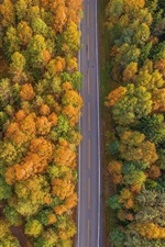 Preview iPhone wallpaper Trees, road, river, autumn, top view