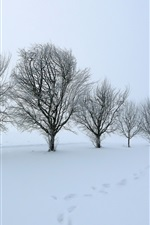 Trees, snow, dusk, winter, white world