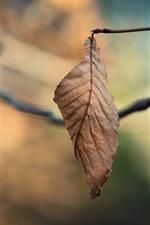 Vorschau des iPhone Hintergrundbilder Zweige, trockenes Blatt, Bokeh