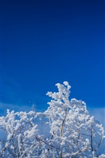 Preview iPhone wallpaper Twigs, tree, snow, blue sky, winter