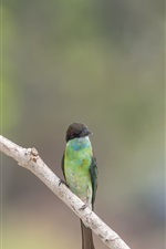 Preview iPhone wallpaper Two birds, bee-eaters, insect