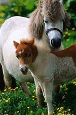 iPhone fondos de pantalla Dos caballos, pony, flores silvestres