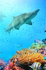 Preview iPhone wallpaper Underwater, fish, coral, shark, sea