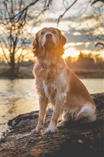 Preview iPhone wallpaper Wet dog, riverside, river, trees, sunset