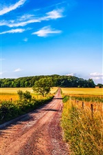 Preview iPhone wallpaper Wheat field, road, trees, blue sky, clouds