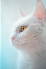 Preview iPhone wallpaper White cat, yellow eyes, blue background