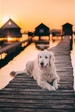 Preview iPhone wallpaper White dog rest, wood bridge, lake, sunset