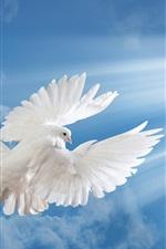 White dove, blue sky, clouds