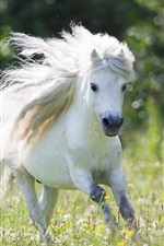 Preview iPhone wallpaper White horse running, mane
