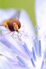 White petals flower, pistils, pollination, bee