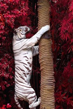 Preview iPhone wallpaper White tiger climb tree, red leaves