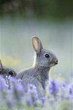 Preview iPhone wallpaper Wild rabbit, flowers, bokeh