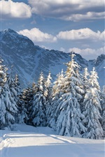 Preview iPhone wallpaper Winter, snow, forest, trees, mountains