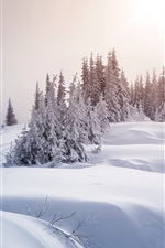 Preview iPhone wallpaper Winter, thick snow, trees, sun