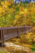 Preview iPhone wallpaper Wooden bridge, trees, river, autumn