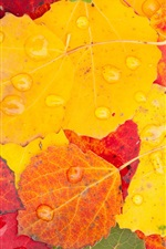 Preview iPhone wallpaper Yellow and red leaves, water drops, autumn