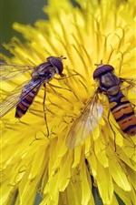 미리보기 iPhone 배경 화면 노란 꽃, 두 벌