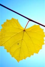Preview iPhone wallpaper Yellow leaves, twigs, blue background, autumn