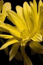 Vorschau des iPhone Hintergrundbilder Gelbe Blumenblätter, Kamille