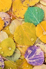 Preview iPhone wallpaper Yellow, red, purple, poplar foliage, colorful