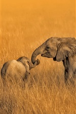 Preview iPhone wallpaper Amboseli, Kenya, National Park, elephants family, grass