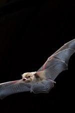 Preview iPhone wallpaper Bat flying, wings, black background