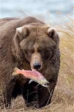 Preview iPhone wallpaper Bear catch a fish, grass