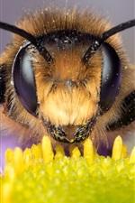 미리보기 iPhone 배경 화면 꿀벌 매크로보기, 눈, 안테나, 데이지
