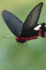 Preview iPhone wallpaper Black butterfly flying, wings, insect