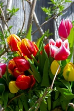 Bouquet, tulips, spring, tree