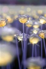 Bright roses, bokeh
