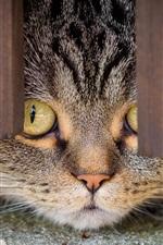 Preview iPhone wallpaper Cat, look, door bottom
