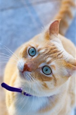 Preview iPhone wallpaper Cat look up, blue eyes, cute pet