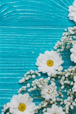 Chrysanthemum and white flowers, blue background