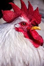 Cock, beak, red crown