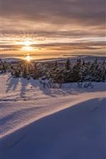 Cold winter, trees, sunset, snow
